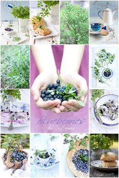 Collage-Blueberries by Cintamani ;-), via Flickr