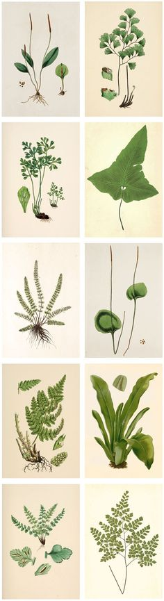 Plant illustration website: Free Printable Wall Art Plant Illustrations | The Painted Hive