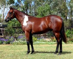 Equine Color: Somatic Mutation on Pinterest   Thoroughbred ...