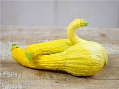 Crookneck-Early Golden Summer Squash - Baker Creek Heirloom Seeds.    50 days. An old favorite heirloom, this is one of the oldest types of squash dating back to pre-Columbus times and has been popular ever since. Easy to grow and good tasting.