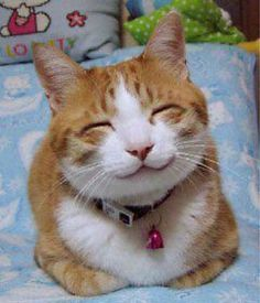 Happy Smiling Cat