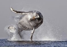 Amazing Whale