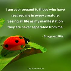 I am ever present to those who have realized me in every creature. Seeing all life as my manifestation, they are never separated from me. - Bhagavad Gita