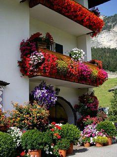 FB My Beautiful Garden
