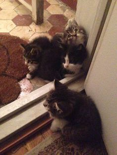 My sister has been feeding a cat outside her flat for 3 days or so, today it brought these to the door... - Imgur
