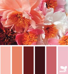 papered palette color palette from Design Seeds Design Seeds, Red Color Schemes, Color Combos, Colour Pallette, Color Balance, Color Stories, Color Swatches, Color Theory, Color Inspiration