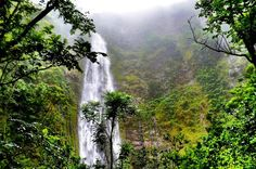 Alone in the Rain – Personal Journey Through a Maui Rainforest - Landlopers