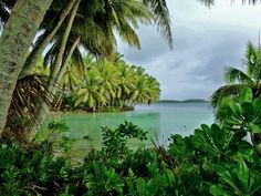 Tabiat aşkı insanın ümitlerini boşa çıkarmayan yegane aşktır ~Honore de Balzac  Palmyra Atoll, Pasifik Okyanusu, Ekvator