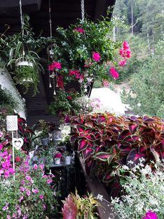 In der Pinken Ecke ganz im Hintergrund mein Muttertagsgeschenk der Kinder: der weiße Pflanztisch! Sagt bloß ihr könnt ihn nicht finden unter all dem Dschungel  ;-) September 2017 Pink, September, Plants, Jungles, Balcony, Kids, Plant, Pink Hair, Roses