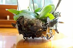 butterfly basket filled with orchids - notice the forged orchid roots.
