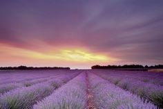 Oh my, stunning lavender fields and a beautiful picture!