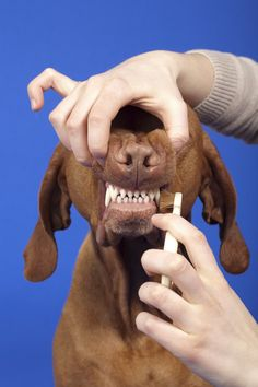 Pet Dental Problems: 9 Dental Issues You Share With Your Cats and Dogs