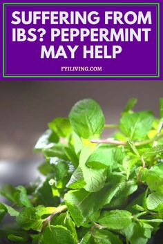 Peppermint May Relieve Symptoms of Irritable Bowel Syndrome (IBS)