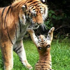 I love you mom... Follow @wildlifeplanet for more amazing wildlife and animals photos @wildlifeplanet #Wildgeography