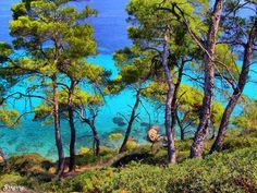 ΠΡΑΣΙΝΟ ΣΕ ΓΑΛΑΖΙΟ - GREEN ON BLUE ΧΑΛΚΙΔΙΚΗ