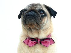 Wedding Pink Martini Bowtie Dog Collar by LuxeMutt on Etsy, $69.95    I mostly love this because of the pug <3
