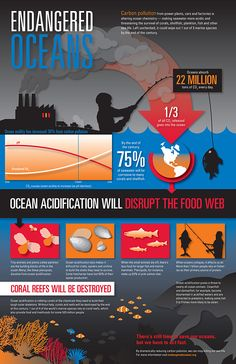 """Infographic Endangered Oceans --> top this off by thinking HARD about the fact that you are EATING things that come from the oceans we have destroyed with chemicals. And if you think """"farmed"""" fish are any better, you're wrong. Marine Conservation, Wildlife Conservation, Ocean Acidification, Ocean Pollution, Plastic Pollution, Save Our Oceans, Marine Biology, Ap Biology, Environmental Science"""