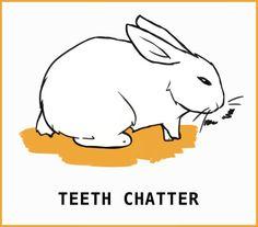 Rabbit Body Language: An Illustrated Guide Rabbit Run, Silly Rabbit, Pet Rabbit, Pet Bunny Rabbits, Bunnies, Rabbit Anatomy, Rabbit Facts, Rabbit Behavior, Female Rabbit