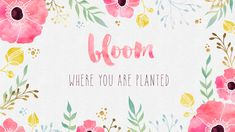 Cute Wallpapers with Quote bloom where you are planted | Free Desktop Wallpaper – Bloom Where you are Planted