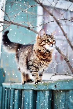 Image uploaded by   ✰. Find images and videos about cat, winter and animals on We Heart It - the app to get lost in what you love.