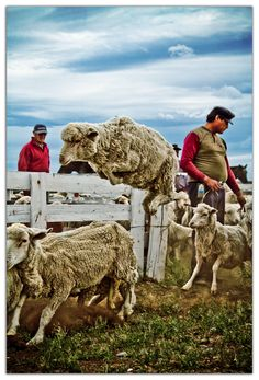 Bahia Bustamante   Patagonia Argentina Ushuaia, Patagonia, Bucket List Destinations, If Rudyard Kipling, Travel Goals, South America, Sheep, Camel, Coastal