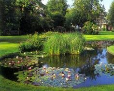 Aquatic Plants for Ponds : Aquatic Plants For Koi Ponds. Aquatic plants for koi ponds. small pond plants,small water plants,soil for pond plants Pond Plants, Aquatic Plants, Water Plants, Water Garden, Outdoor Projects, Outdoor Decor, Pond Design, Small Ponds, Ecology