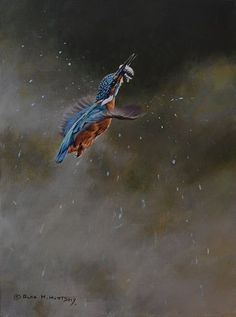 Kingfisher with minnow - acrylic - 16 x price - Original British Bird Paintings For Sale - Alan M Hunt Paintings For Sale, Bird Paintings, Photorealism, Kingfisher, Wildlife Art, Bird Prints, Bird Art, Natural World, Cool Pictures