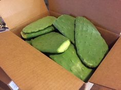 Cactus pads are one of the best food sources for all tortoise species. We offer thick, meaty pads that have a long shelf life.