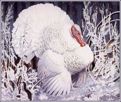 Charles Frederick Tunnicliffe (British, White Turkey, pencil and watercolour. Turkey Painting, Autumn Painting, Fall Paintings, Wildlife Paintings, Wildlife Art, Nature Artists, Royal College Of Art, Bird Tree, Bird Drawings