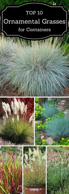 Top 10 Ornamental Grasses for Containers - All For Garden Landscaping Plants, Front Yard Landscaping, Landscaping Ideas, Outdoor Plants, Outdoor Gardens, Landscape Design, Garden Design, Ornamental Grasses, Ornamental Grass Landscape