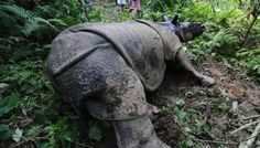 Poachers killed two one-horned rhinos and chopped off their horns in Assam's Kaziranga National Park (KNP) on Wednesday morning, officials said.