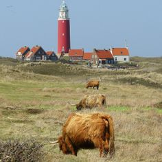 Lighthouse village on the Dutch island of Texel, Northern Holland. (Highland…
