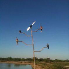 Dove Decoy Tree