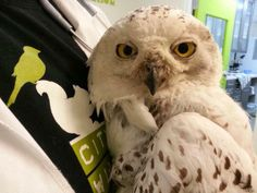 Tweet from @DCSnowyOwl 10:36PM 1/31/14 And since I'm on pain meds, my eyes are getting droopy. Warm in the strange box with a bl...