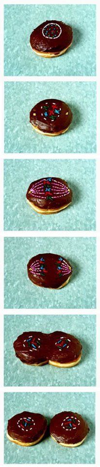 6.  How are you going to remember the stages of cell division? Share your thoughts and items.  No repeating!!!