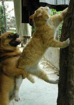 "Pug assists his cat roommate: ""Go... go... go!"""