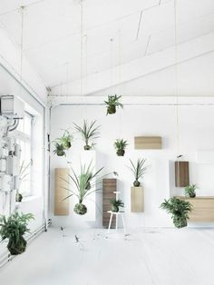 hanging plants determine deco ideas houseplants