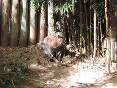 Temaikèn – O bioparque argentino - Furos de Carol #buenosaires #temaiken #zoo #lujan #argentina #tigre #viagem #travel #animal #bioparque #canguru #kangaroo