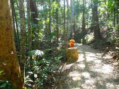 A quiet walk to Kondalilla Falls (Queensland) and who should I see????