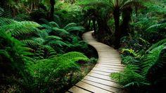 1280x720 Nature wood road