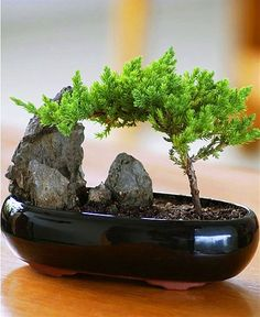 Hoe simpel kan het zijn de illusie van bonsai te creëren.