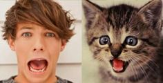 Cats that look like One Direction. Adam I know you hate cats, but this seriously made me laugh! Hate Cats, One Direction Harry Styles, Dont Forget To Smile, Boy Cat, Little Kitty, What Do You See, Cool Bands, Knowing You, That Look