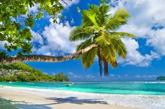 Idyllic tropical scenery - Seychelles Wall Mural ✓ Easy Installation ✓ 365 Day Money Back Guarantee ✓ Browse other patterns from this collection! Beach Wallpaper, Photo Wallpaper, Seychelles Islands, Sea Dream, Tropical Beaches, Paradis, Dream Vacations, Dream Trips, Strand