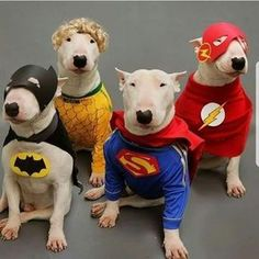 Bullys dressed as super heroes!