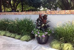 Burgundy Ficus, Angelonia, Verbena and Dichondra l Unique by Design Large Containers, Container Design, Unique Gardens, Verbena, Flower Planters, Ficus, Flower Beds, Container Gardening, Landscape Design