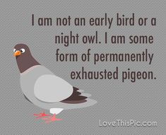 I am not an early bird funny quotes quote fun jokes tired funny quotes humor haha funny life quotes