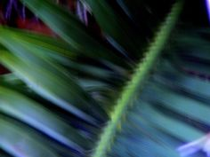 smudged palm Smudging, Plant Leaves, Palm, Plants, Photos, Photography, Image, Pictures, Photograph