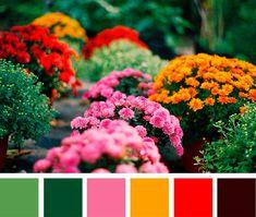 color palette – florals