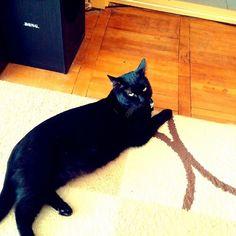 Blackie my black panther.