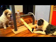 selbstgebautes Intelligenzspielzeug für Hunde - Hundetraining - Dog Activity - YouTube
